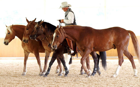 Campus Parelli Natural Horsemanship con Franco Giani!