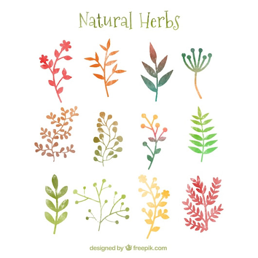 Natural herbs in watercolor style