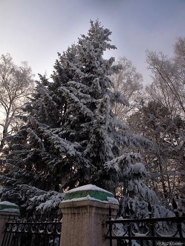 Снежная ель by S.Leonov