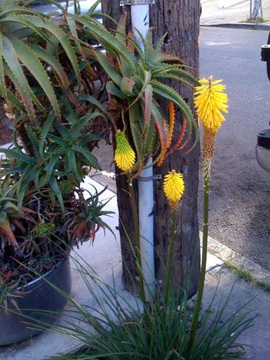 seuss-flowers.jpg