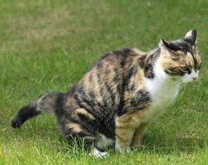 Nama Yg Bagus Untuk Kucing Perempuan 81021 Nama Untuk Kucing Comel Lucu Dan Unik