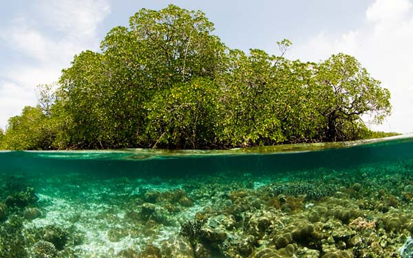 "perierga.gr - Τα ""τροπικά δάση"" της θάλασσας!"