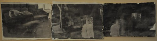 A Day in the Life of a Cat, Fort Washington, Maryland by deneebarr