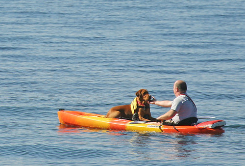 A kayaker's best friend