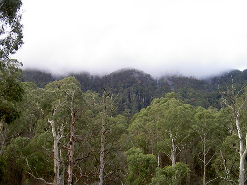 On the way to Mt Buller