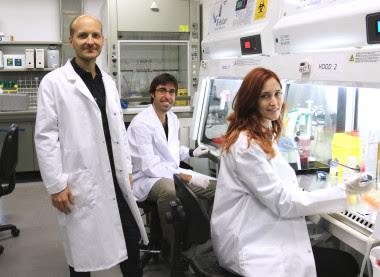 <p>Los investigadores Xavier Trepat, Raimon Sunyer y Pilar Rodríguez. / IBEC</p>