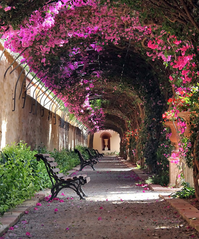 calles-arboles-flores (11)