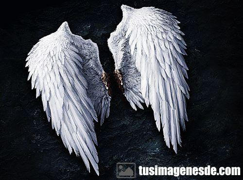 Imágenes De Alas De ángel Imágenes