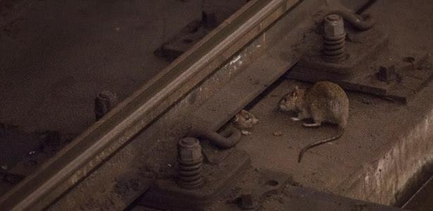 Ratos nos trilhos da estação de metrô Union Square em Nova York. A cidade já teve 109 prefeitos e, ao que parece, quase o mesmo número de planos para eliminar esse flagelo. O placar coletivo é de aproximadamente 0 a 108