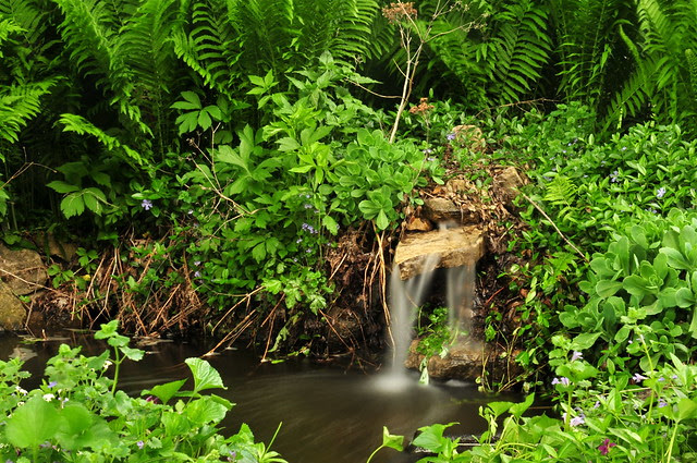 Backyard Pond (DS3_9446)