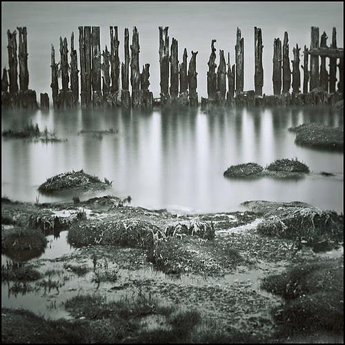 the wetlands