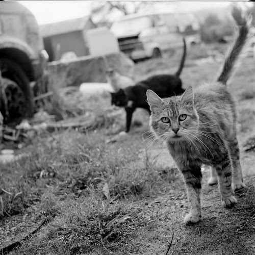 Feral Cats B&W