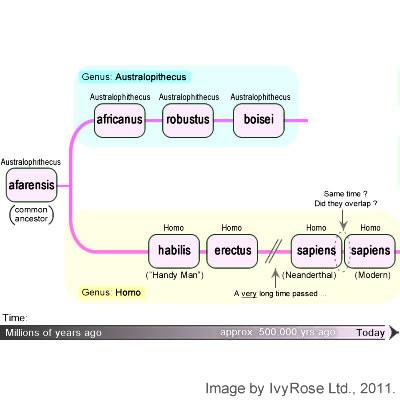 Hominid Evolutionary Tree