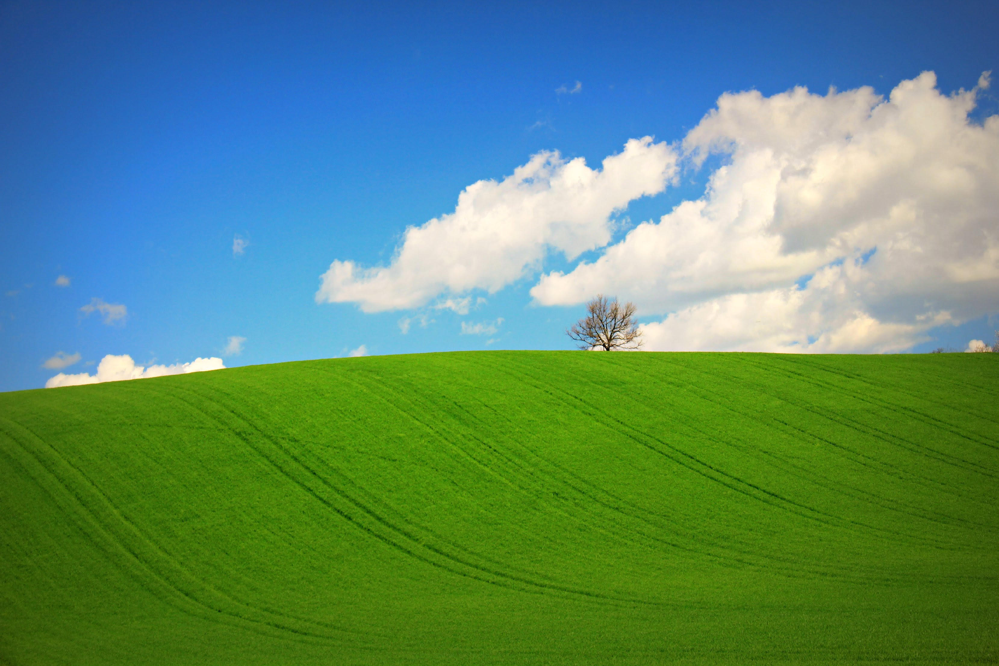 Hermosa Pradera Verde Hd 3318x2212 Imagenes Wallpapers Gratis