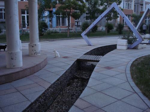 Cats in Shenyang, China _ 0165