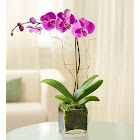 1-800 Flowers Elegant Orchid Purple Plants
