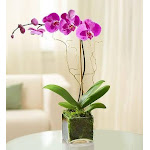 Flower Delivery by 1-800 Flowers Elegant Orchid Purple Plant