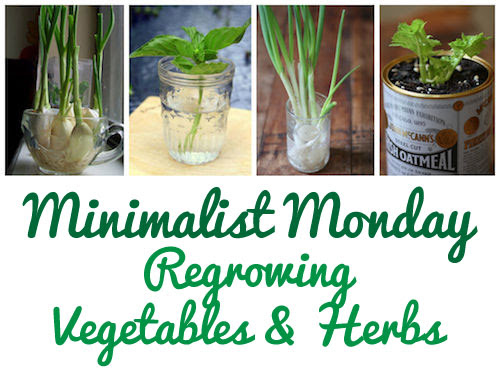 Minimalist Monday: Gardening (How To Regrow Vegetables & Herbs)