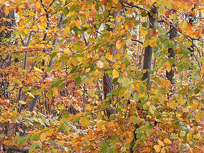 feuilles d'automne.jpg