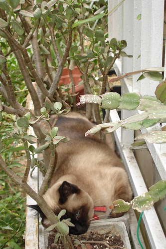 Her Ladyship in the planter