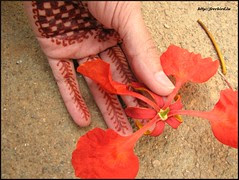 Gulmohar - on the occasion of 2 marriages.