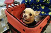 Boleh Pelihara Anjing di Kota Bekasi, tapi Ada Syaratnya...