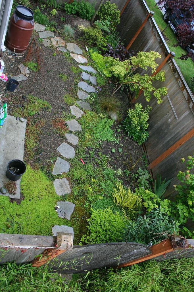 My little yard