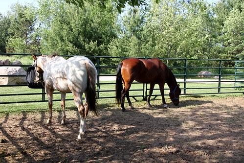 spur ranch 2