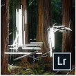 Adobe Photoshop Lightroom 5 WIN & MAC [Download]: Amazon.de: Software