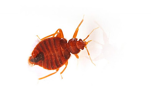 Ten Ways to Stay Bed Bug-Free This Winter
