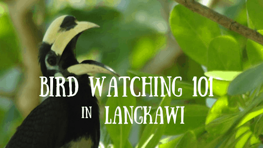 Langkawi Bird Watching 101