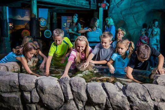 Sea Life Arizona Summer Programs {+ Score a Discount on Admission} - The CentsAble Shoppin