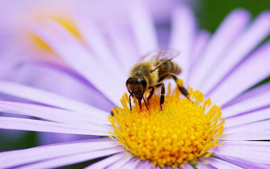 Bees get happier and more optimistic after eating a sweet treat - MyBeeLine