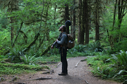 Listening For The Sound Of Silence In Washington's Hoh Rain Forest | Northwest Public Broadcasting