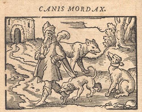 Canis Mordax  - Osius