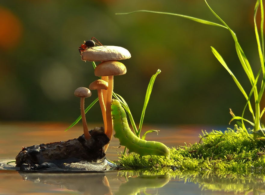 mushroom-photography-vyacheslav-mishchenko-11