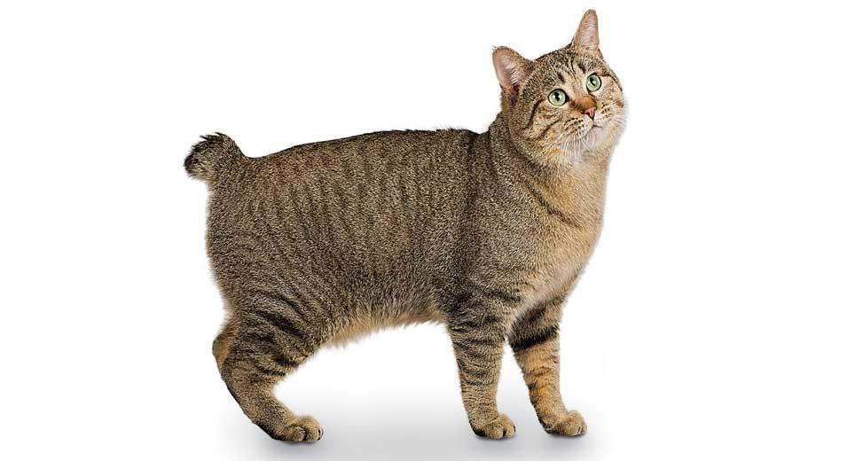 Free Kittens Craigslist Sacramento - Kitten