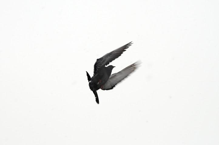 birds of the acme parking lot_1052_1 web