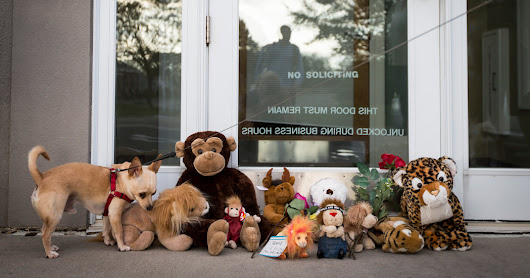American Who Killed Cecil the Lion Keeps Dental Office Closed