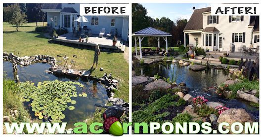 Planning A Pond Renovation|Rochester New York|NY|Acorn Ponds & Waterfalls