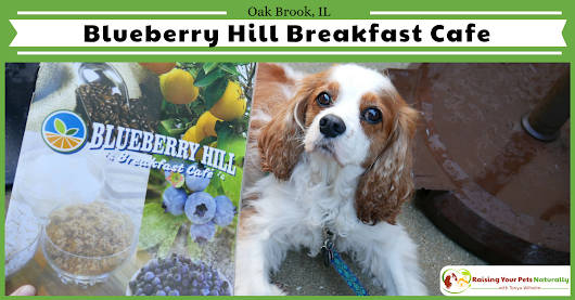 Dog-Friendly Restaurants in The Chicago Area | Blueberry Hill Breakfast Cafe Review ~ Raising Your Pets Naturally with Tonya Wilhelm