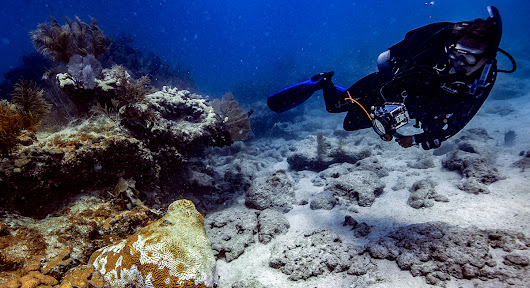 NOAA Rolls Out New Online Resource for Florida Coral Disease Response