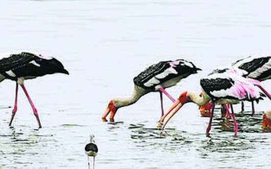 Soon, lakes in western suburbs will attract birdwatchers - TAMIL NADU - The Hindu