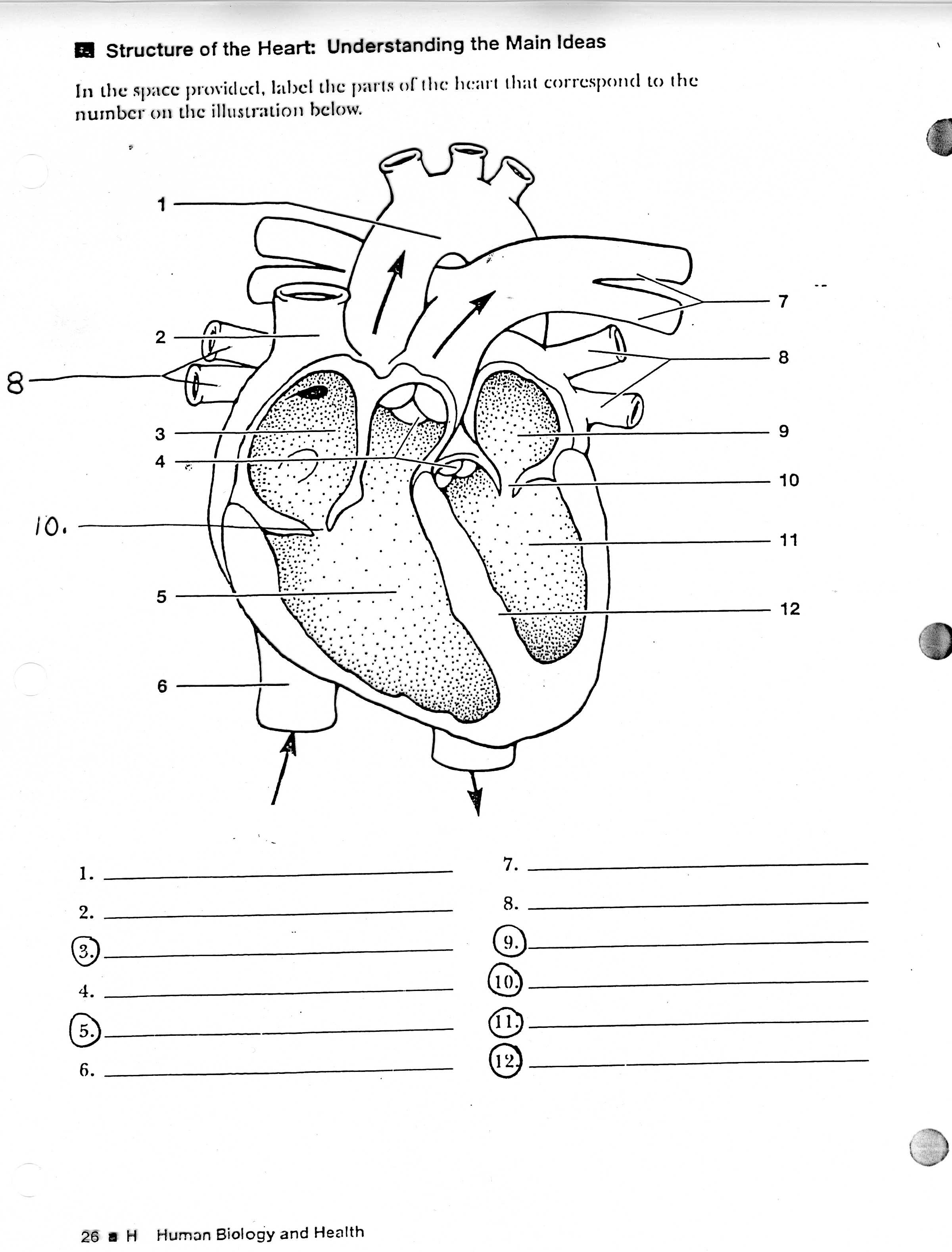 Heart Diagram Worksheet - Davezan