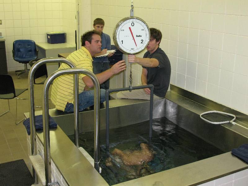 measure body fat percentage in water