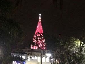 Árvore do Downtown pode ser vista de longe (Foto: Daniel Silveira / G1)