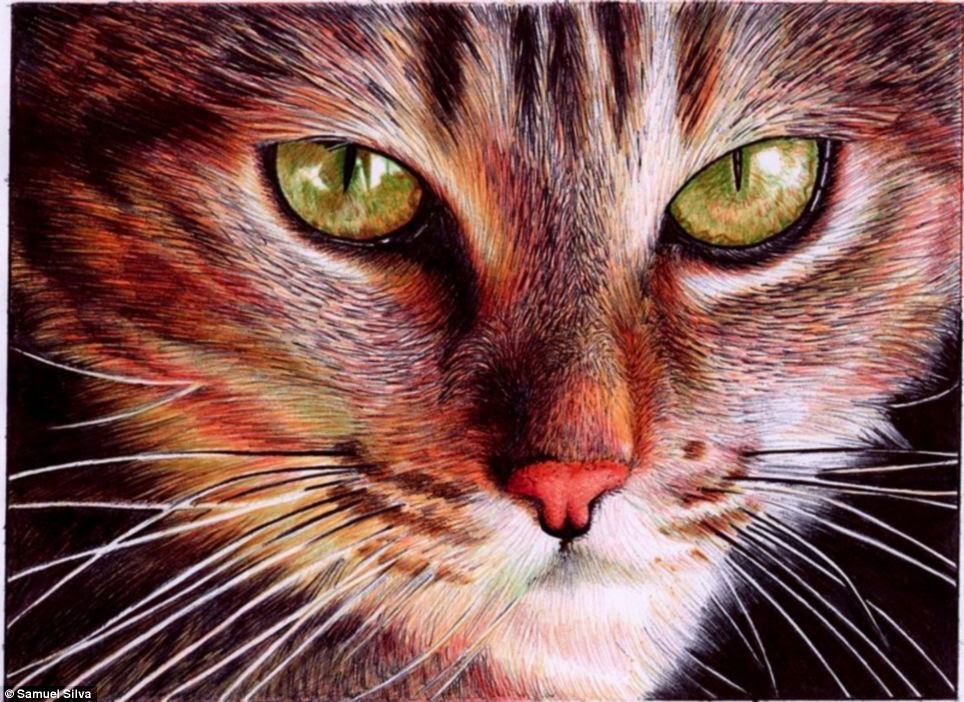 Silva said the original size of this drawing of a cat's face is about the same as two credit cards