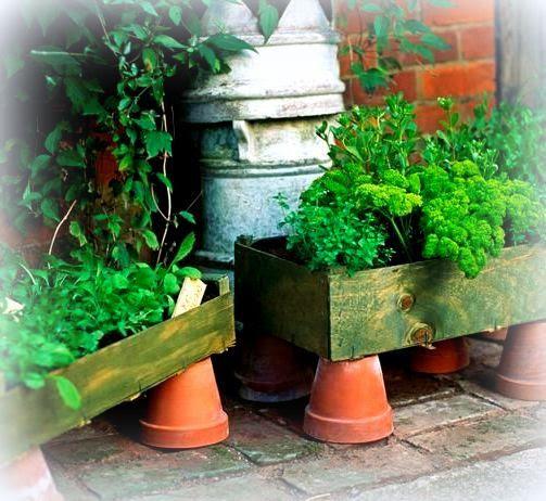 photo herbs_zpsbea06be4.jpg