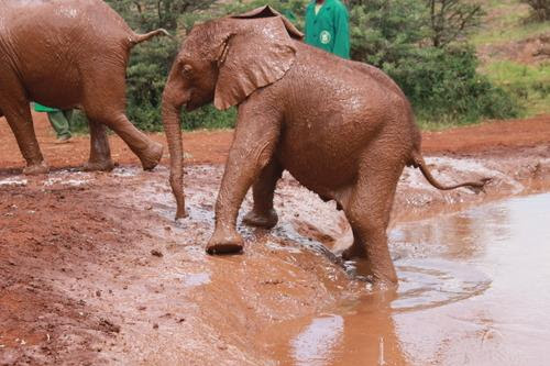 WATCH: Two Minutes of Adorable Baby Elephant Bath Time