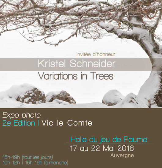 Expo photo Variations in Trees – Vic le Comte/Auvergne